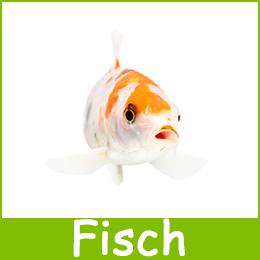 Futterautomat Fische