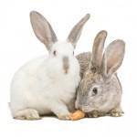 Futterspender für Kanninchen
