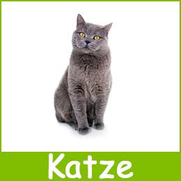 Futterautomat Katze